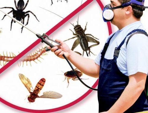 شركة رش حشرات في الفجيرة |0547137712| مبيدات