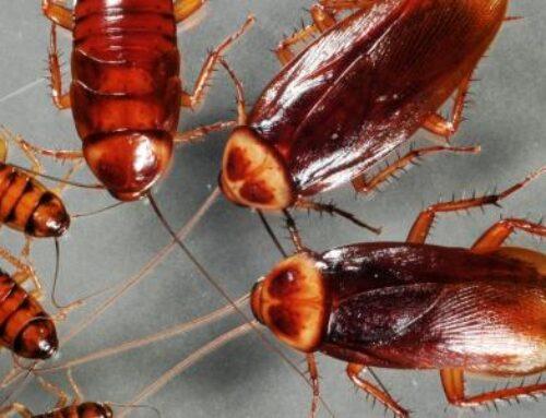 شركة مكافحة الصراصير في دبي |0561484426| مبيدات الآفات