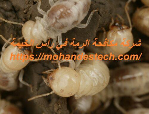 شركة مكافحة الرمة في رأس الخيمة |0561484426