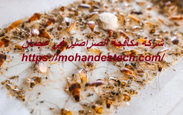 شركة مكافحة الصراصير في عجمان