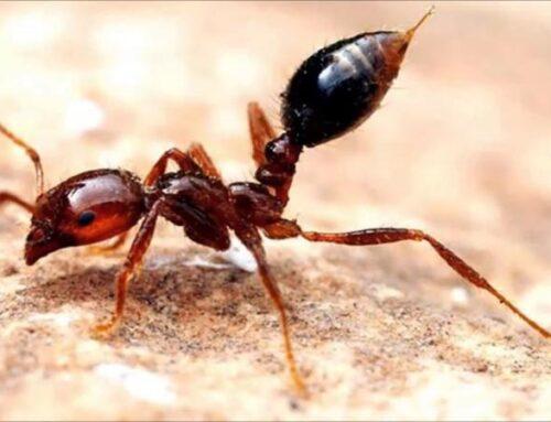 شركة مكافحة النمل في ابوظبي |0561484426| النمل الميداني
