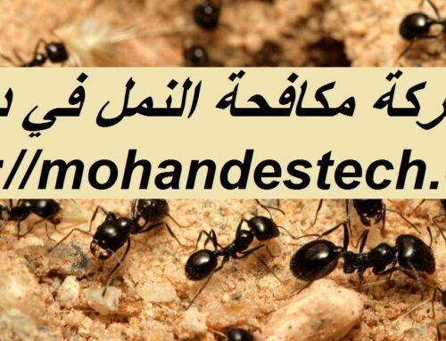 شركة مكافحة النمل في دبي |0561484426| النمل الابيض
