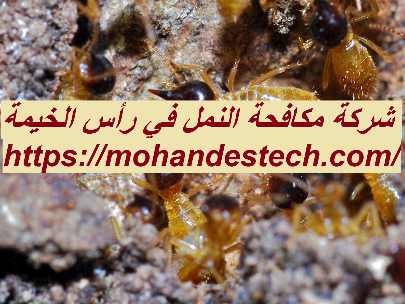 شركة مكافحة النمل في رأس الخيمة
