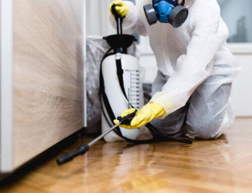 شركة مكافحة النمل في عجمان |0547137712| النمل المنزلي