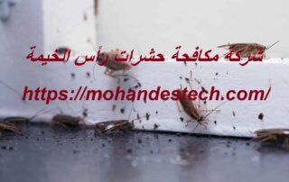 شركة مكافحة حشرات رأس الخيمة