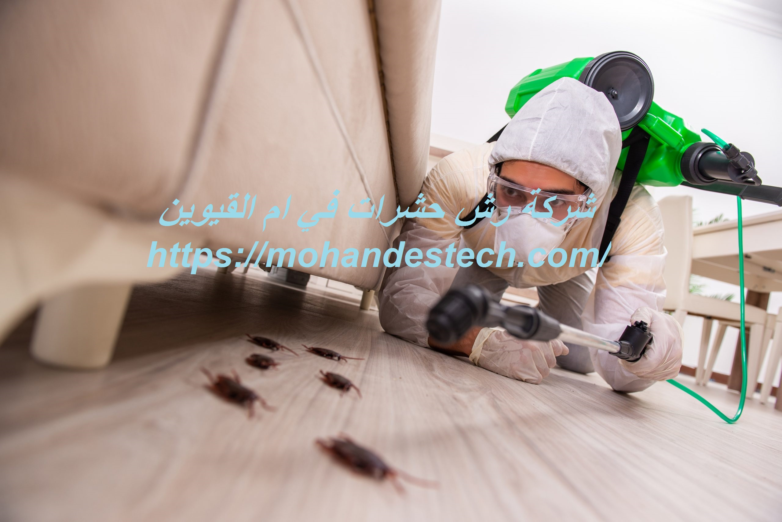 شركة رش حشرات في ام القيوين