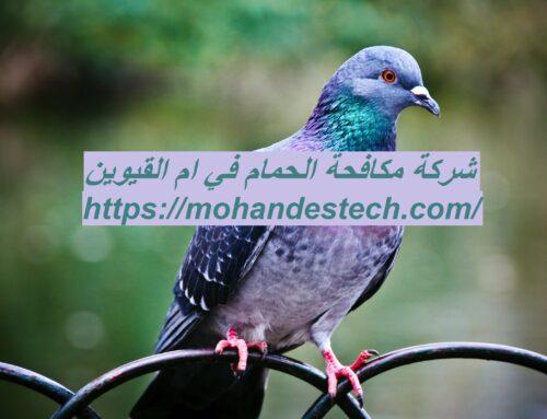 شركة مكافحة الحمام في ام القيوين |0561484426| طرد الطيور