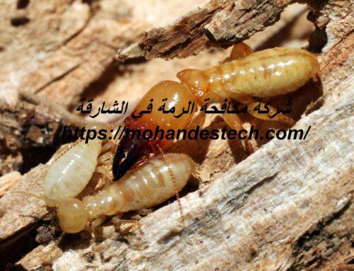 شركة مكافحة الرمة في الشارقة |0561484426| مكافحة حشرات