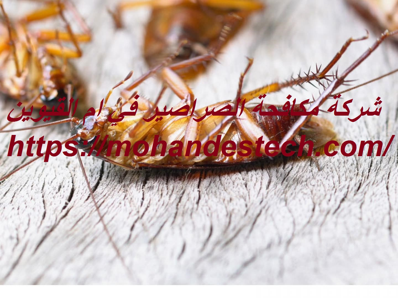 شركة مكافحة الصراصير في ام القيوين