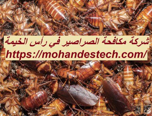 شركة مكافحة الصراصير في رأس الخيمة |0561484426