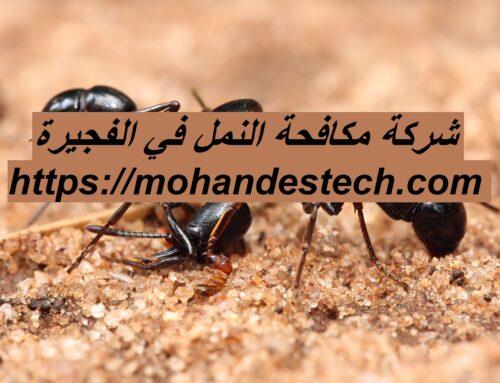شركة مكافحة النمل في الفجيرة |0561484426| مكافحة حشرات